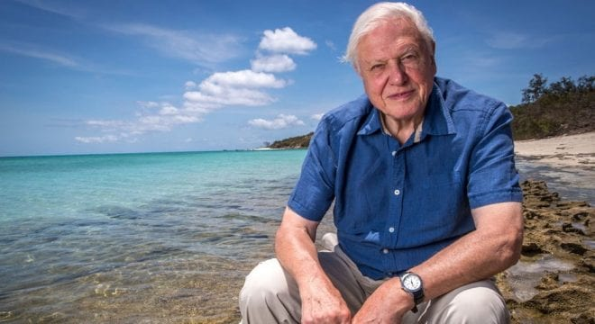 David Attenborough sitting on a stone