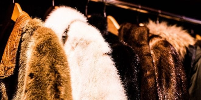 'Ethical Fur' Advert Banned For Being Misleading, Marking The Trade's 'Inevitable Demise'