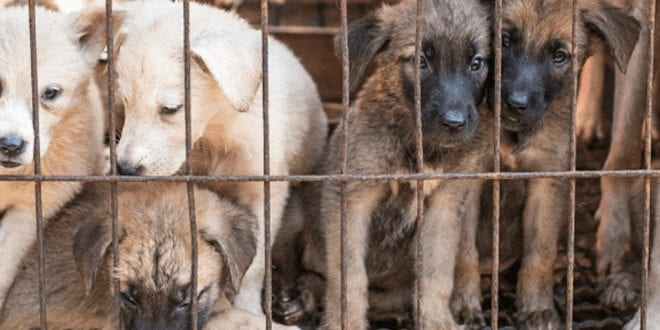 One of South Korea's biggest dog meat factories closes due to falling demand and relentless activism