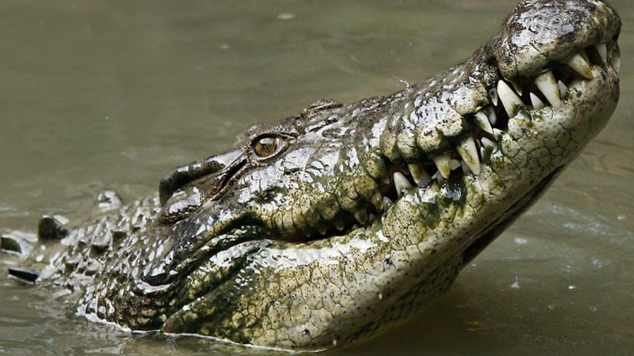 The Best Pet Vegetarian Reptiles Background