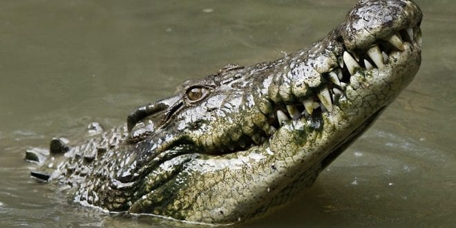 Vegan crocodiles ruled the world 200 million years ago