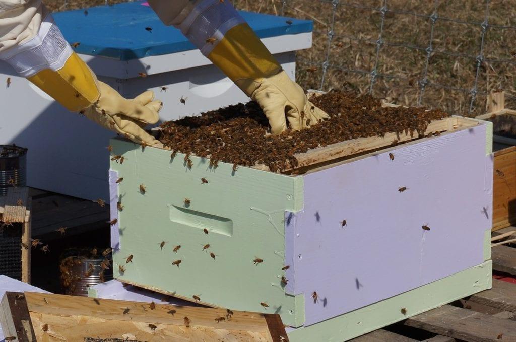 Beekeeping in honey frames for harvesting honey.