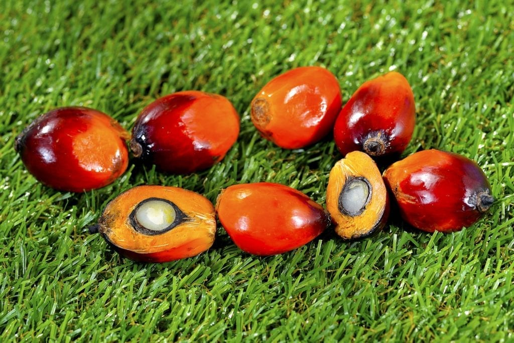 Oil palm fruits lying on grass