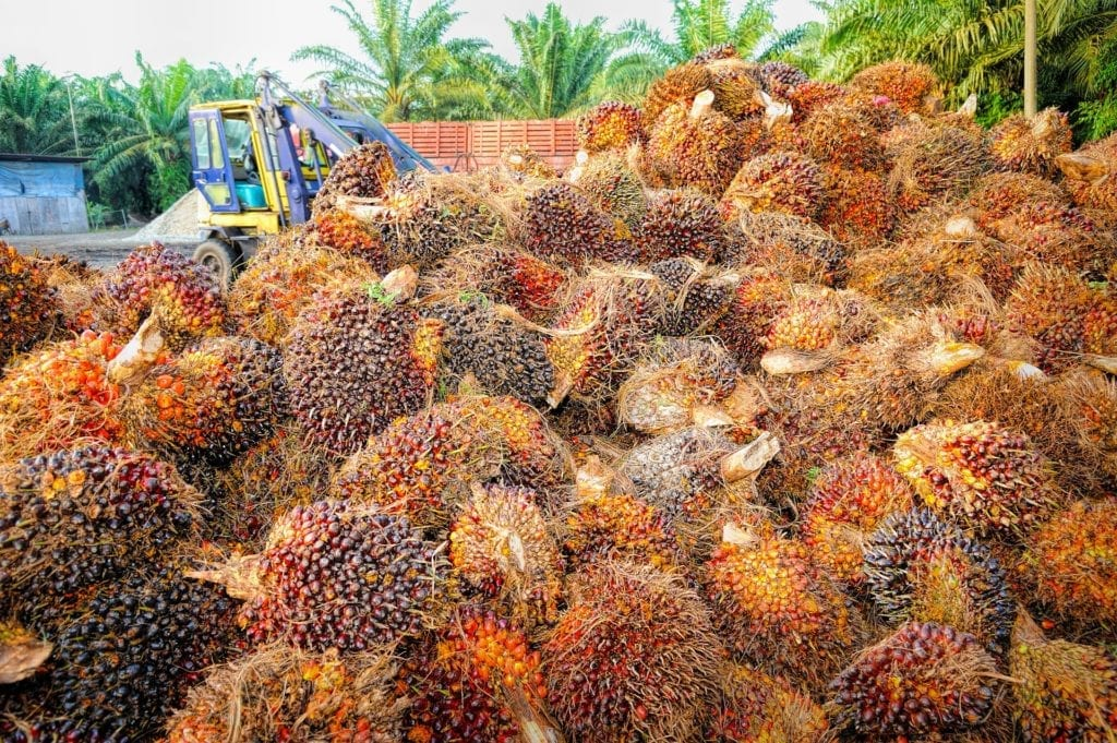 Oil Palm fruits being offloaded from a truck