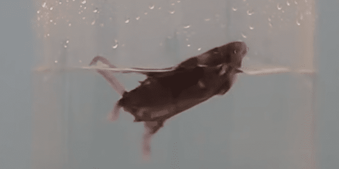 Pharma Company AbbVie Bans Forced Swim Animal Testing In Groundbreaking Move