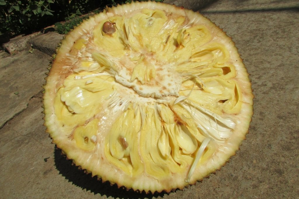 Half portion of a ripe and raw jackfruit lying on floor.