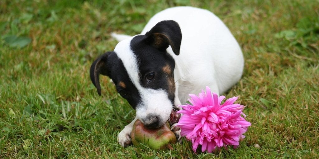 Is A Vegan Diet Healthy For Dogs