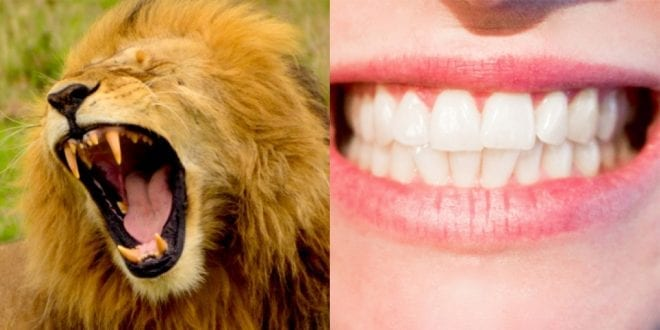 'But Humans Have Canines' Why A Common Argument Against Veganism Is Totally Flawed