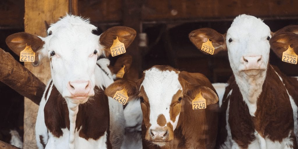Farmers Want To Engage With 'Moderate Vegans' To Prevent The Industry's Inevitable Downfall