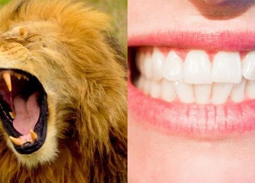 canine-comparison-teeth
