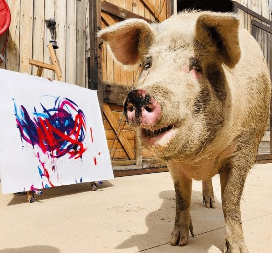 Pig's paintings raise $145,000 for animal welfare1