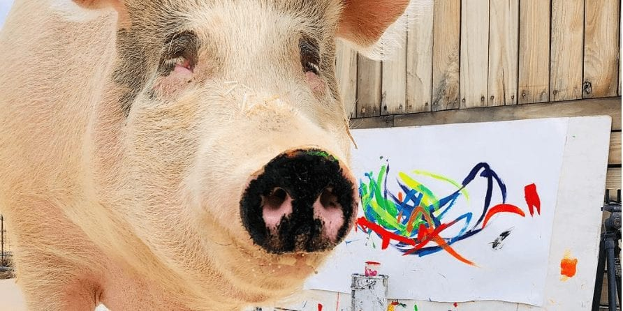 Pig's paintings raise $145,000 for animal welfare