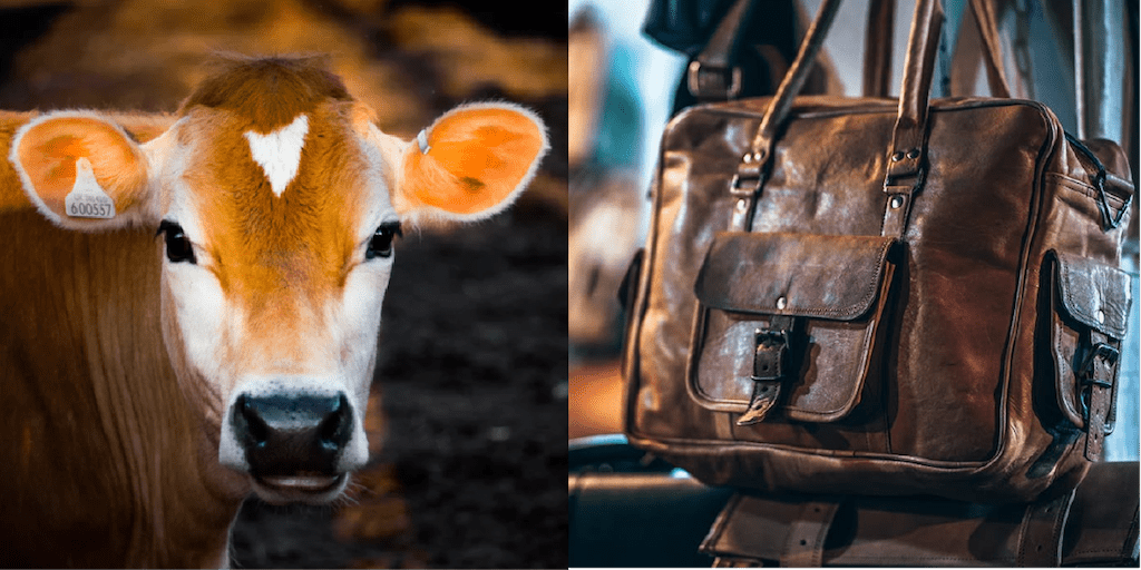 The Brutal Realities Of Leather- One Billion Animals Slaughtered And Abused Every Year