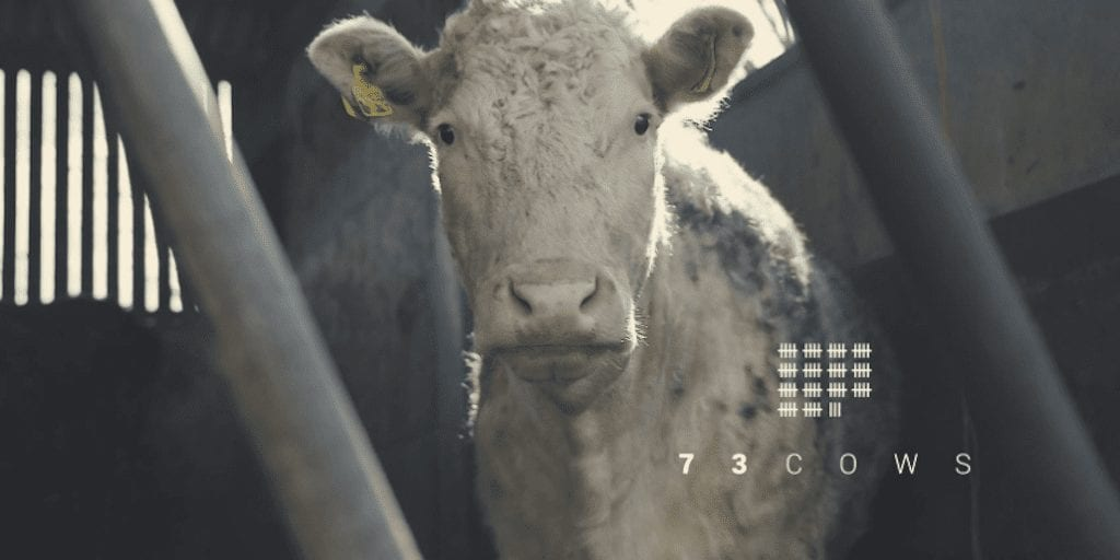 Vegan Documentary '73 Cows' To Be Screened To Policymakers At European Parliament