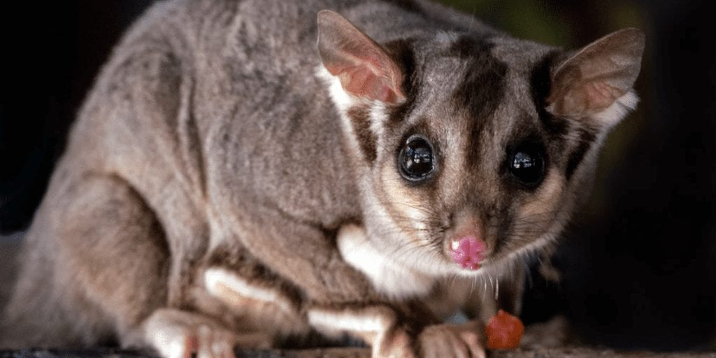 Australia's Network Of Animal Sanctuaries Has Saved 13 Endangered Species From Extinction