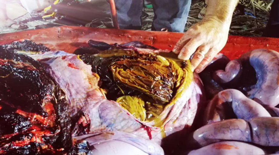 Dead whale found with 40kg of plastic bags in its stomach