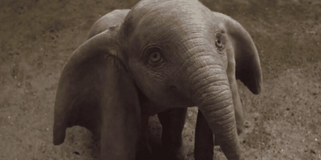 Disney's 'dumbo' remake hailed for 'surprising pro-animal rights agenda'