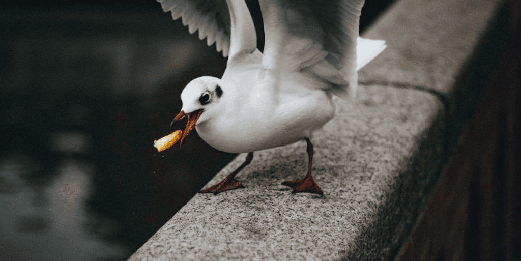 Man kills seagull for stealing his chips, locals demand cull
