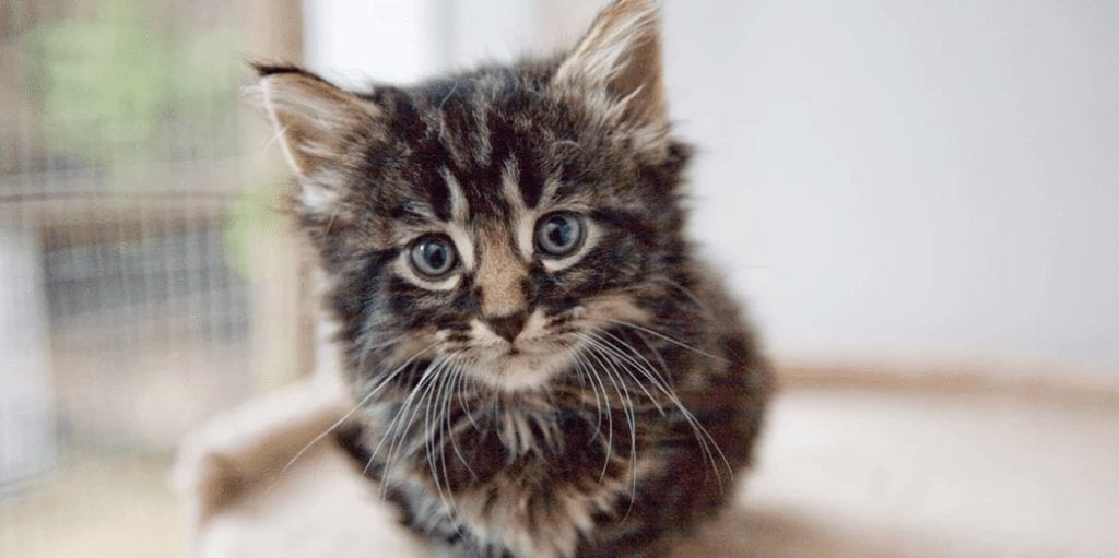 The US has pulled the plug on a 'disturbing' kitten slaughterhouse where scientists fed cats to other cats