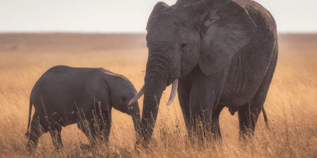 Botswana lifts 5-year elephant hunting ban
