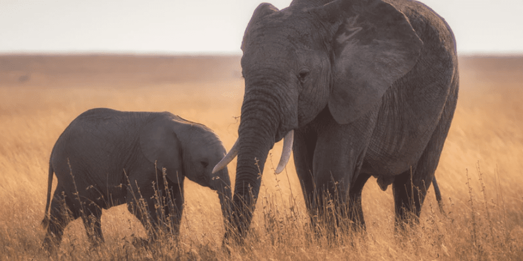 Botswana lifts 5-year elephant hunting ban
