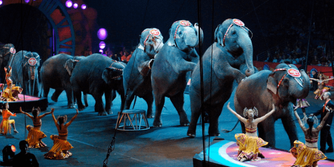 The US Is One Step Closer To Banning Travelling Animal Circuses