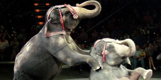 UK Government Announces Ban On Wild Animals In Travelling Circuses