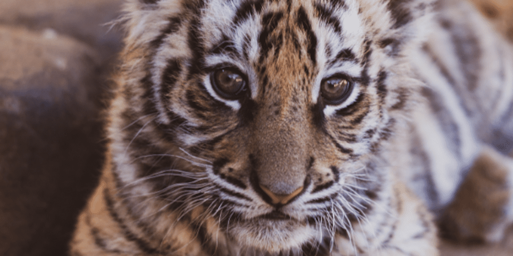 UN Report Reveals 1 Million Animals Face Extinction Because Of Humans