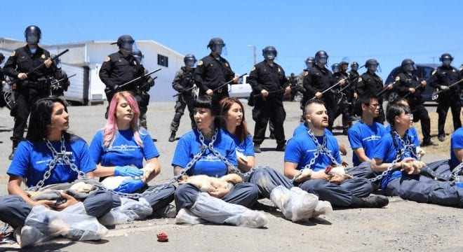 vegan activists arrested