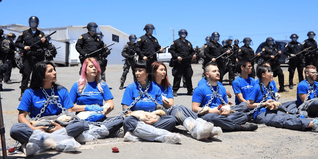 vegan activists arrested