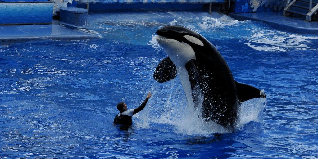captivity and breeding of dolphins