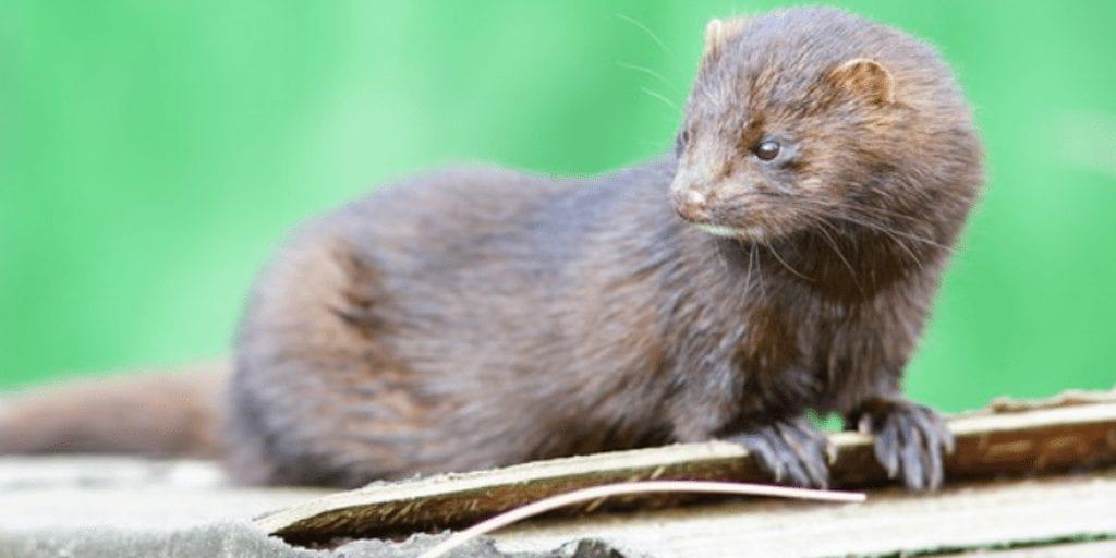 Ireland to ban animal fur