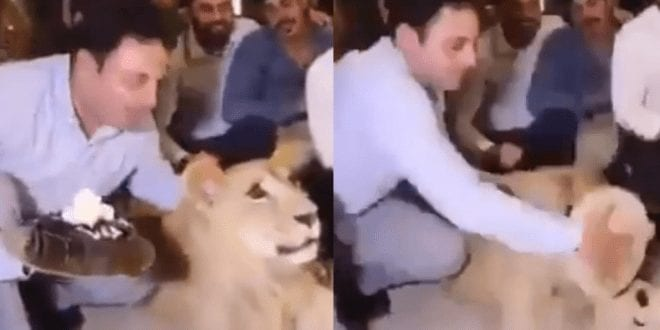 Ricky Gervais slams video of man smashing cake into a lion's face