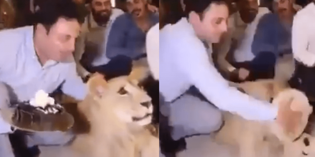 Ricky Gervais slams video of man smashing cake into a lion's face