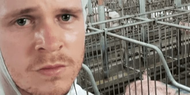 Prominent protester arrested after exposing horrific conditions at pig farm