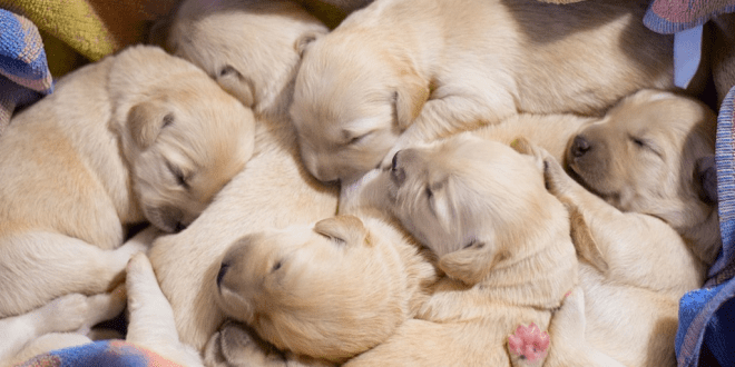 Traditional pet shops banned in England