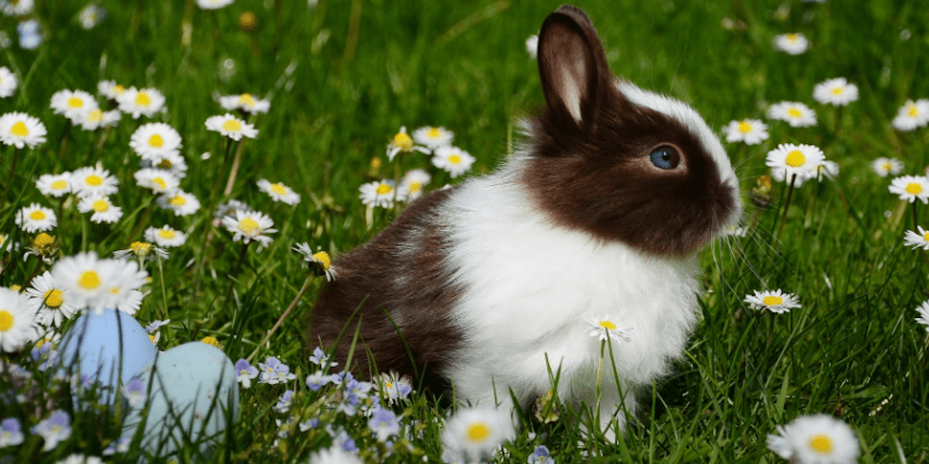 rabbit sitting in grass showing less use of animal testing in china