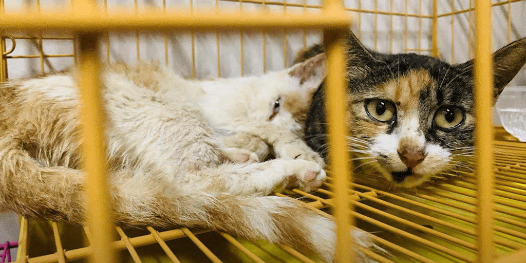 Over 600 cats rescued from slaughterhouse in China