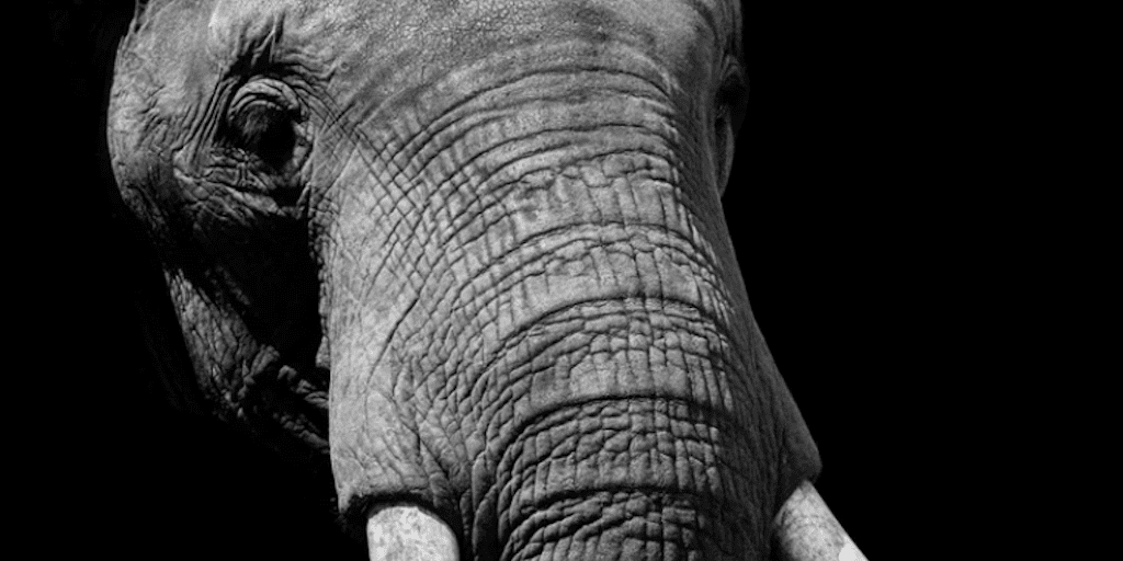 underweight elephant dies alone after 43 years in a zoo