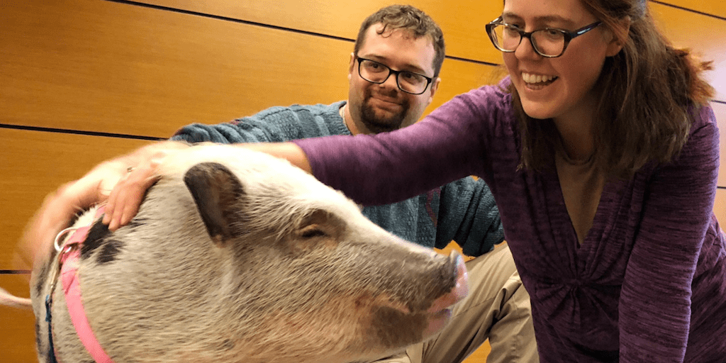 Harvard introduces course to train students to battle for animal rights
