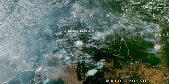 The Amazon Rainforest Is Burning Down