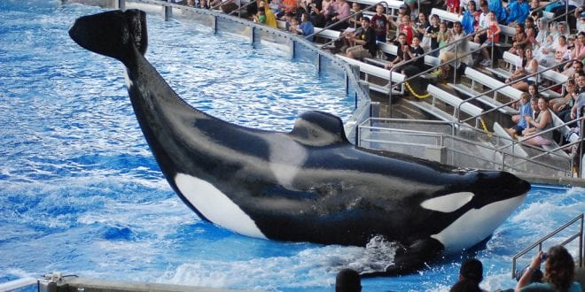 Ex-SeaWorld trainers reveal whales were drugged and starved