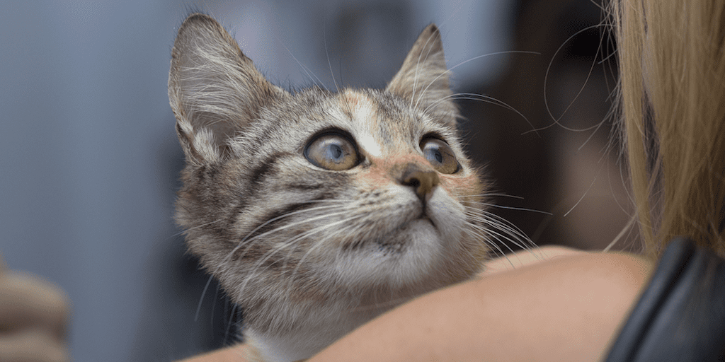 09 cats rescued from trailer riddled