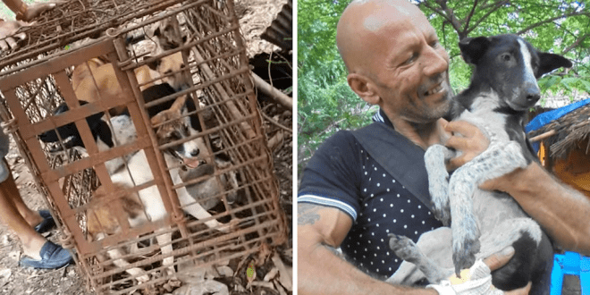 7 dogs crammed in tiny cages are saved from slaughter in Cambodia
