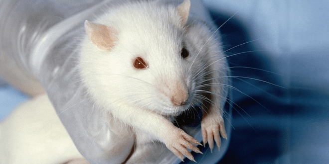 Animal testing to be drastically reduced in the US
