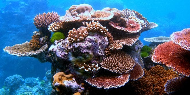 Outlook for Great Barrier Reef now 'very poor', but veganism can save it