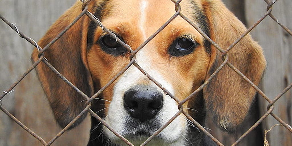 Delaware becomes first state to achieve 'no kill' status for shelter animals