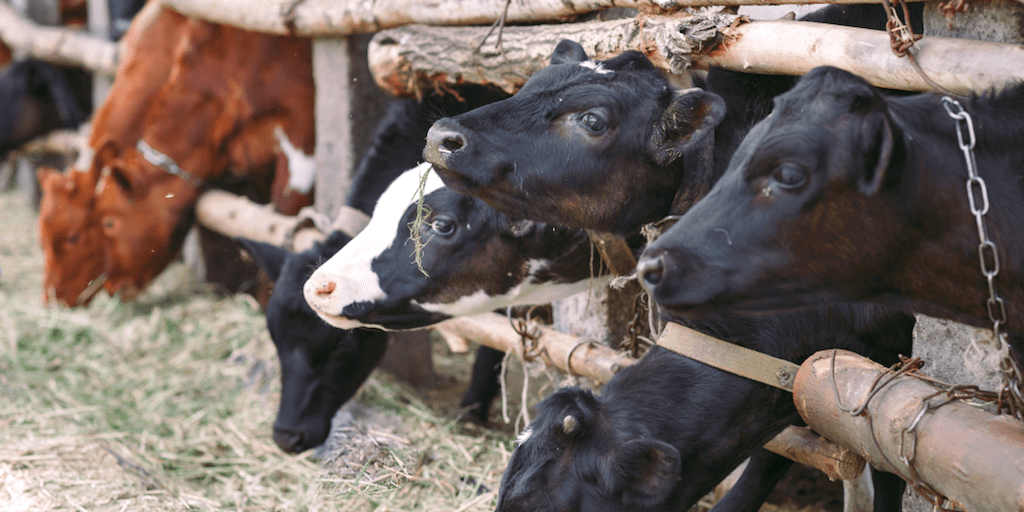 Leading animal farmers admit production is set to drastically fall