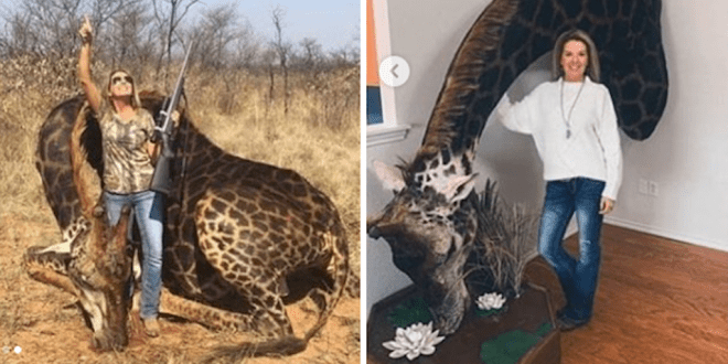 Lewis Hamilton slams trophy hunter who killed endangered black giraffe