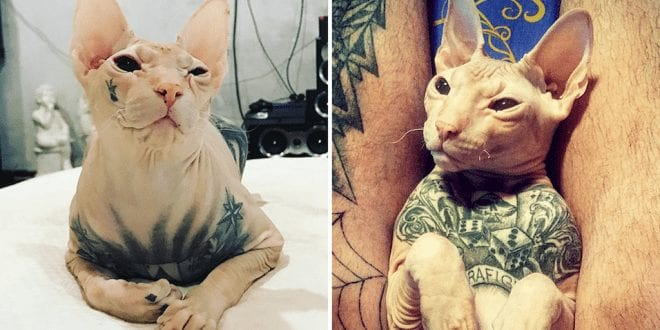 Outrage as images of man's heavily tattooed cat emerge